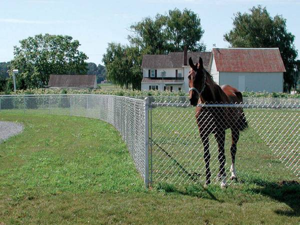 A horse is kept in a field enclosed by galvanized chain link fence.