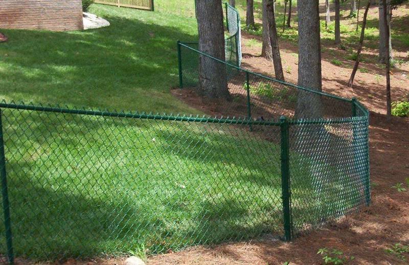Green backyard chain link fence and wood fence.