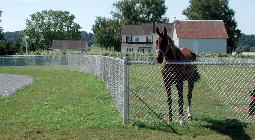Chain link fence around a horse farm, a horse stand next to the fence.