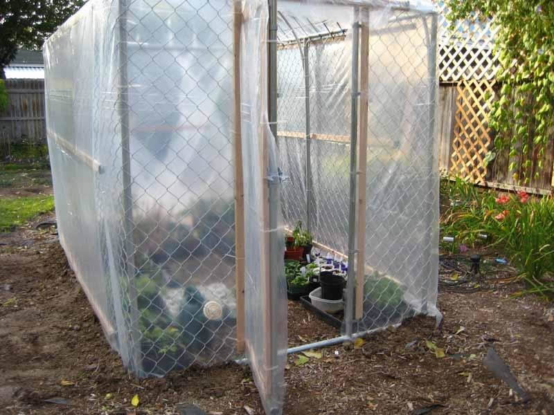 A small-scale greenhouse is made of chain link fence and its outer surface cover by transparent plastic sheeting.